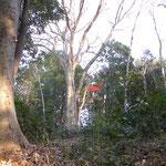 観察の森 ケヤキ