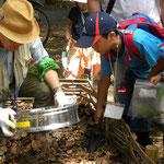 親子自然観察会 土壌生物観察