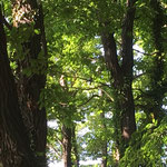 アオゲラ (中心部に小さく写っています)済美山自然林