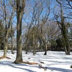 1月22日(月)に降った雪が低温のため融雪しない