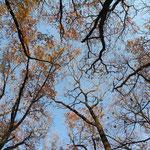 自然林 林内から空