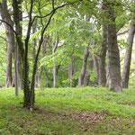 緑が増す自然林