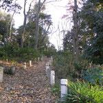 観察の森 チャノキの観察路