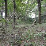 大型台風の強風で倒木・落枝がありました(済美山自然林)