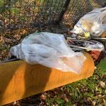 観察の森 ゴミ