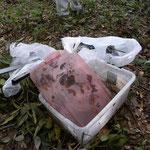 済美山自然林でゴミ拾い