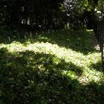 観察の森 ヒガンバナ エリア 草刈り後