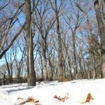 済美山自然林の雪景色
