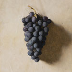 "Carlo Russo, ""Grapes"", 8"" x 10"", oil/panel"