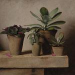 """Carlo Russo, """"Cacti"""", 20"""" x 22"""", oil/linen"""
