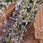 gefrorene Tropfen II