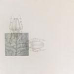 käfer im Kopf | 80 x 110 cm | Graphit , Collage auf Bütten