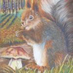 OCTOBRE, Pinceau l'écureuil prépare ses réserves pour l'hiver - Pastel sec