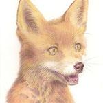 Le petit renard - Crayon de couleur sur papier blanc  Vendu