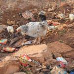 Hühner auf der Strasse, alle in Privatbesitz