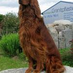 Onkel: Cosmo the Irish Spirit of Nature (Fam. Fischer)