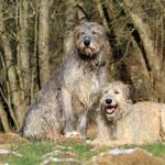 Herr und Frau Wolf zum Zweiten