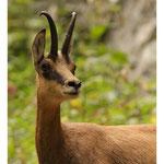 Parc Naturel Piatra Craiului