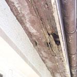Feuchteschäden am Traufkasten unterhalb des Wellplattendachs