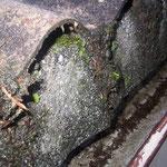 Nicht regelgerechte Ausbildung der Traufkante und altersbedingte Schäden an der Teerpappe