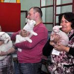 """Конкурс черных и белых кошек """"Инь-Ян"""", белые участники"""