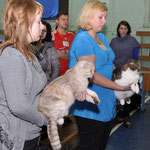 Сравнение кота и кошки КШ