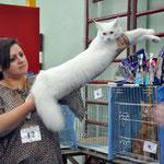 Лучшая кошка