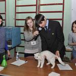WCF-ринг молодых, эксперт А. Минеев