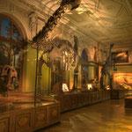 In der Urgeschichtlichen Schausammlung wird archäologisches Material von der Altsteinzeit bis zum frühen Mittelalter präsentiert.