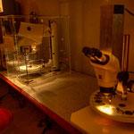 Museumsbesucher können selbst mikroskopieren und sich – unterstützt durch modernste optische Geräte – auf Entdeckungsreise durch den Mikrokosmos begeben.