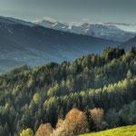 Dichter Wald oberhalb des Stubaitals