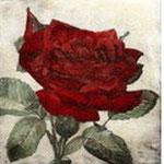 Rosen Radierungen