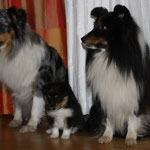 Jule, Queen und Shadow