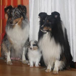 Jule, Dusty und Shadow