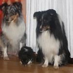 Jule, Bonnie und Shadow