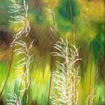 November grass @ Sylt island, November, 2013