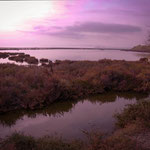 L'étang de Maguelone