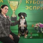 "23.02.2013 Dog Show CAC-UA ""Akana Cup - 2013"" judge Guido Vandoni (Italy) Entlebuch cattle dog AMULETTE SOZVEZDIE UDACHI - JCAC, JBOB, BOB !"