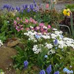 les parterres fleuris