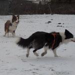 Auf dem Hundeplatz