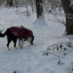 "in diesem Winter ist ""Brombeer"" voll angesagt"