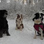 Josie, Pei und Tazz