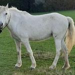 Palomit