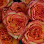 Rosenöl, Rosa damascena