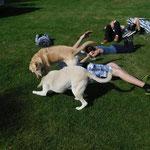 Auch die Hunde sind dabei ;-)