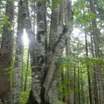 Tree-Love