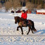 Uteritt på vintern på Emmas islandshästar