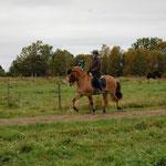 Skari från Sör Sellnäs, född 1999. Skari är en pigg och känslig häst med ett stort hjärta. Skari reds in av Emma 2003. Emma har ridit hans mamma och pappa också och varit med Skari ända från början (från augusti 1999).
