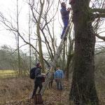 Teamwork zum Anbau der Fledermauskästen. Foto: Karsten Peterlein