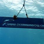 ... und wunderschönem Unterwasserzeichen.